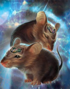 The image shows a drawing of two mice with their brains exposed.