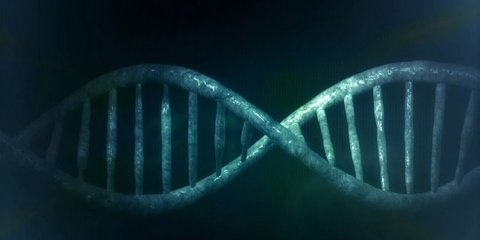 This image shows a strand of DNA.