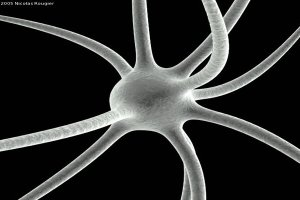 This is an illustration of a neuron.