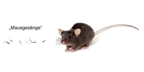 his image shows a mouse.