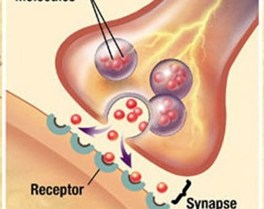 Diagram of a synapse.