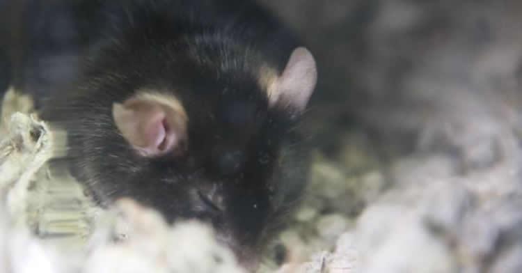 Calcium in Brain Controls How Long We Sleep