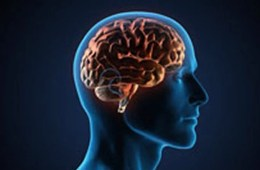 Image shows a person's head and the outline of a brain in orange.