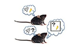 Image shows two rats with speech bubbles.