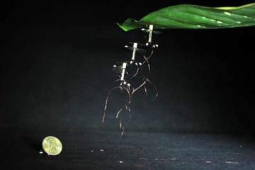 Image show the RoboBee.