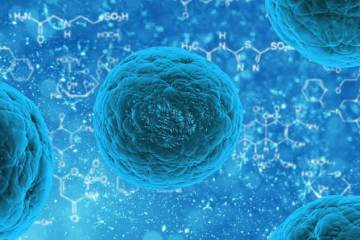 Image shows stem cells.