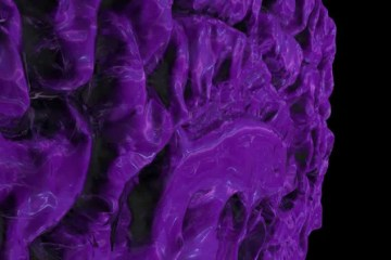Image shows a purple cell.