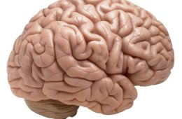 Image of a brain.