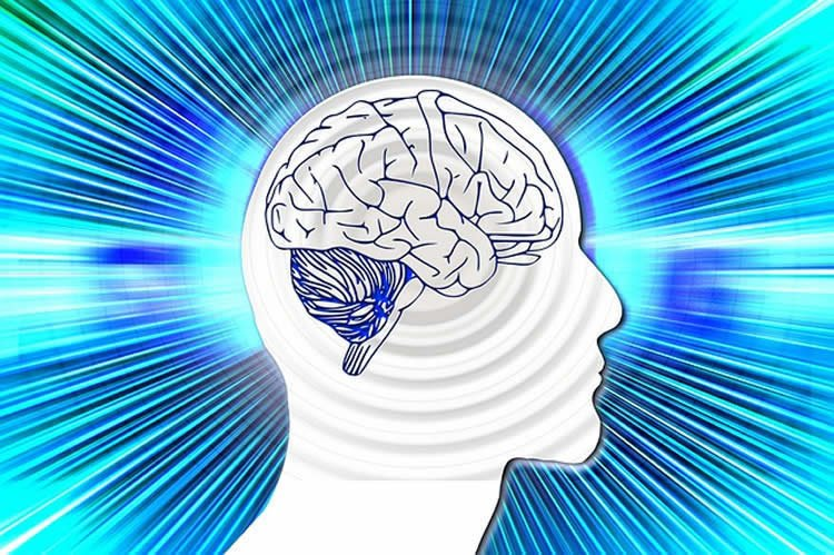 Image shows a drawing of a head with the brain exposed.