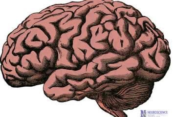 Image shows a brain