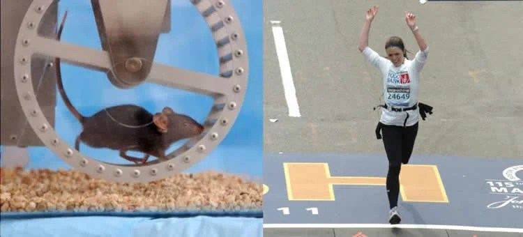 Image shows a mouse on a wheel and a woman running a race.