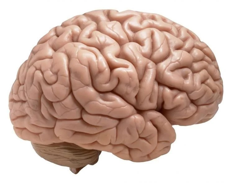Brain Inflammation Linked To Suicidal Thinking In Depression