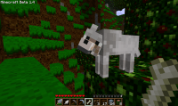 Minecraft  Wolves | Never Mine, Craft