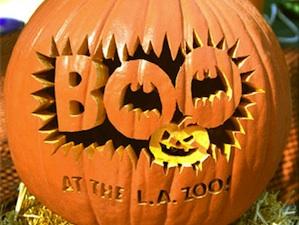boo at the zoo pumpkin