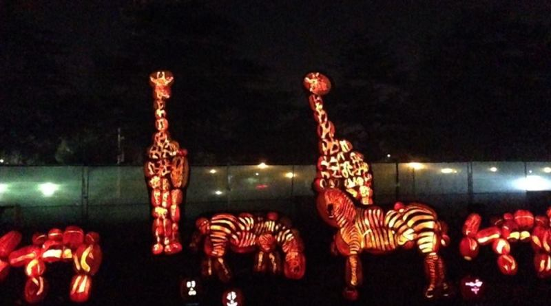 Rise of the Jack O'Lanterns 2015 giraffes