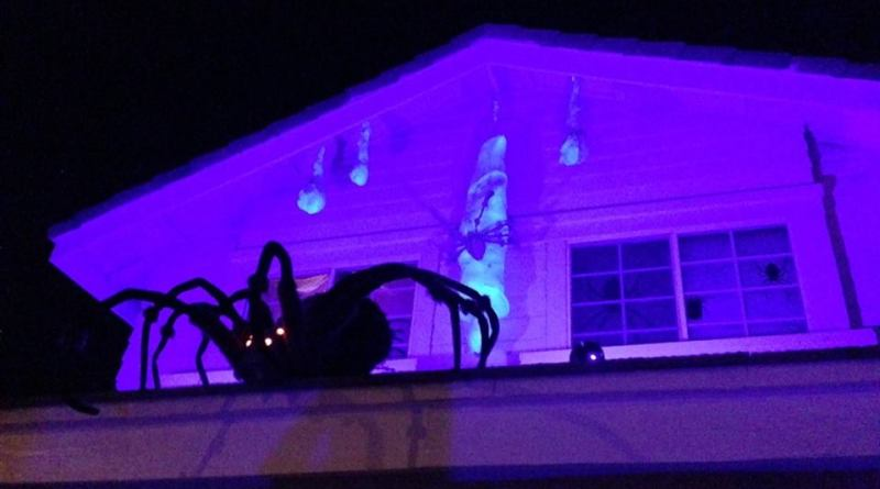 coffinwood-cemetery-2016-spider-on-roof