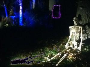forgotten-hollows-skeleton