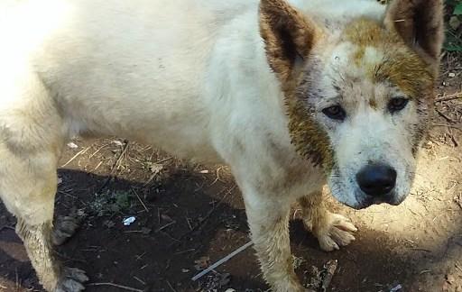 Found Dog In Mokelumne Hill!