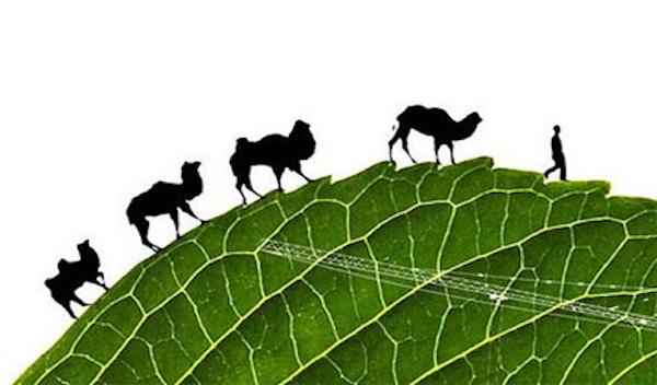 一帶一路恐成全球生態負面影養。 圖片來源:華發網
