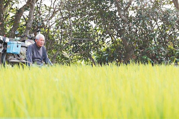 農保擬納入農民年金。 圖片來源:聯合新聞網