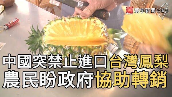 中國突禁止台灣鳳梨進口。 圖片來源:寰宇新聞