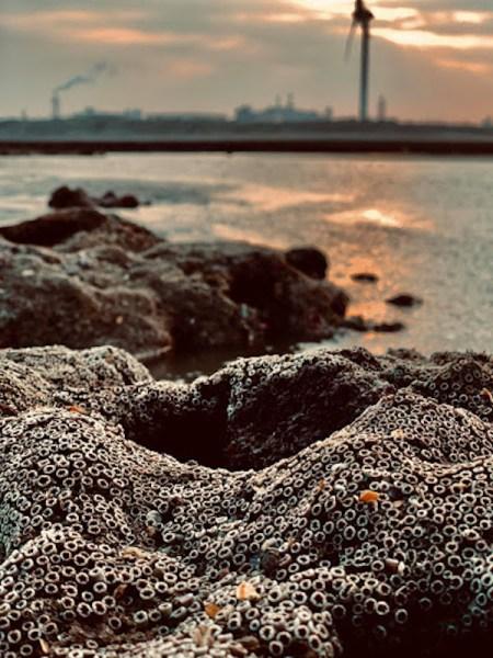 桃園藻礁公投是為環保還是已經政治化? 圖片來源:ALLENCHEN'S LAB