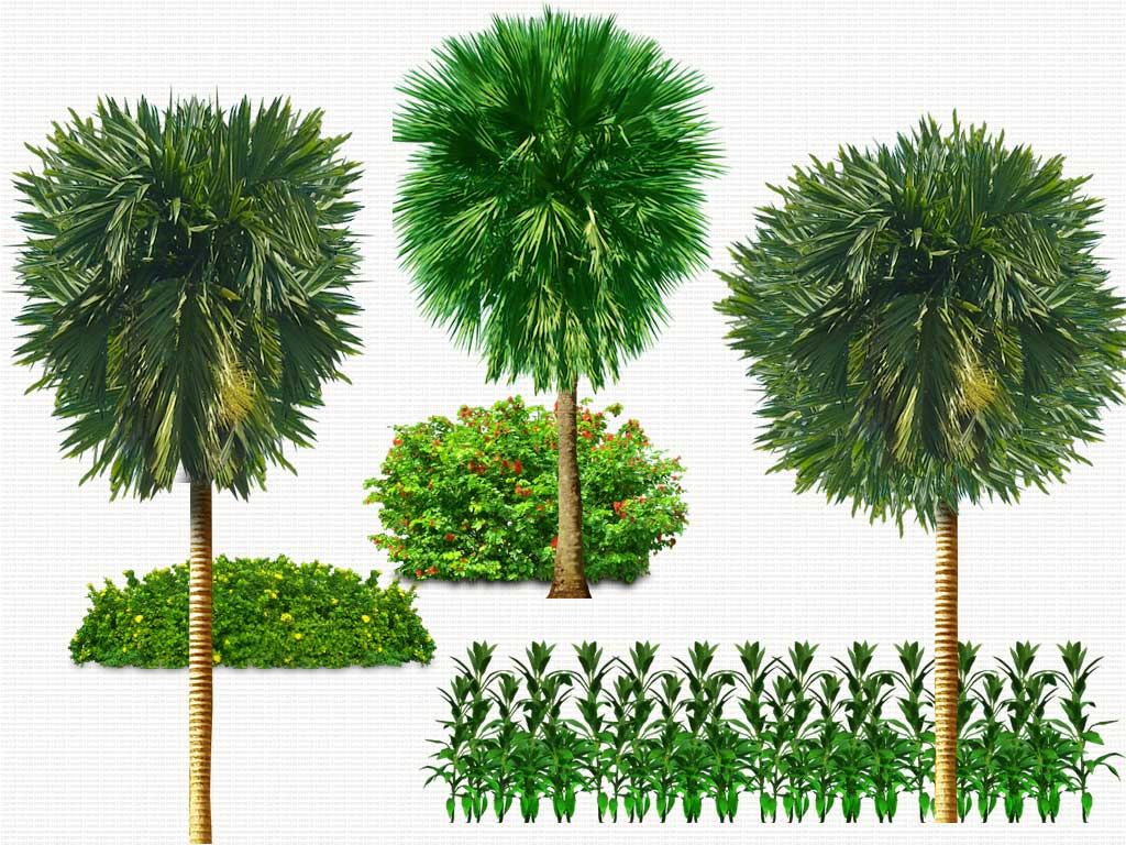 14 Psd Plants Trees Images Psd Tree Free Download Psd Trees Plants And Free Plant Graphics Photoshop Newdesignfile Com