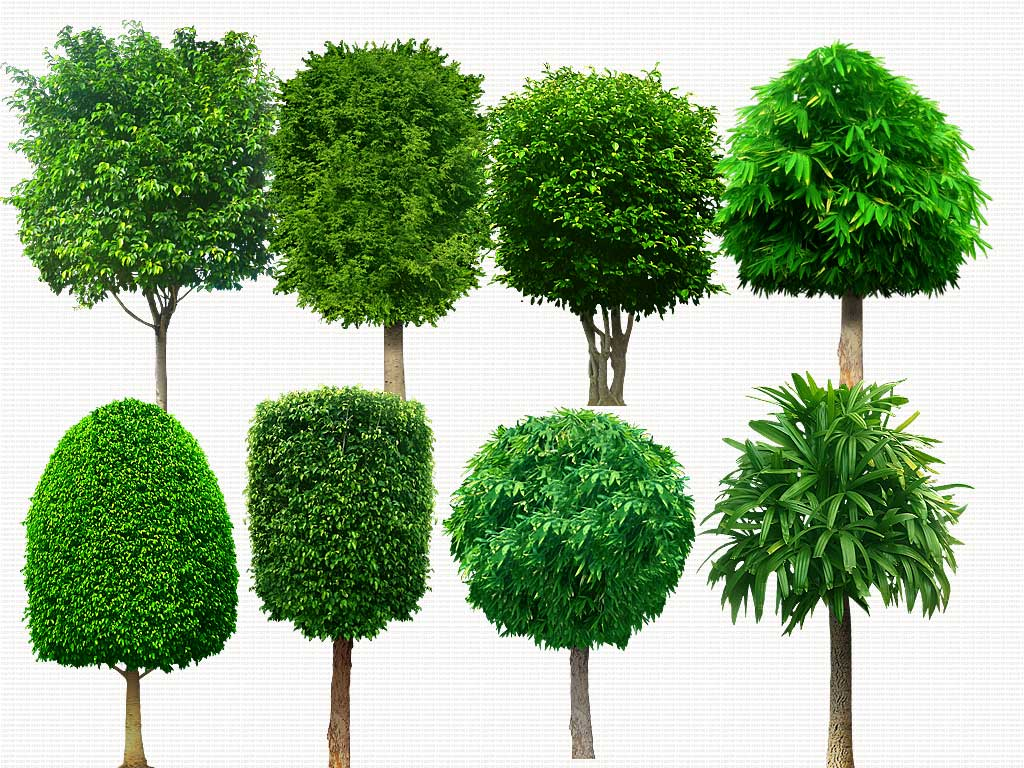 17 Psd Trees Plants Images Psd Tree Free Download Photoshop Trees Plan View Graphic And Psd Tree Free Download Newdesignfile Com