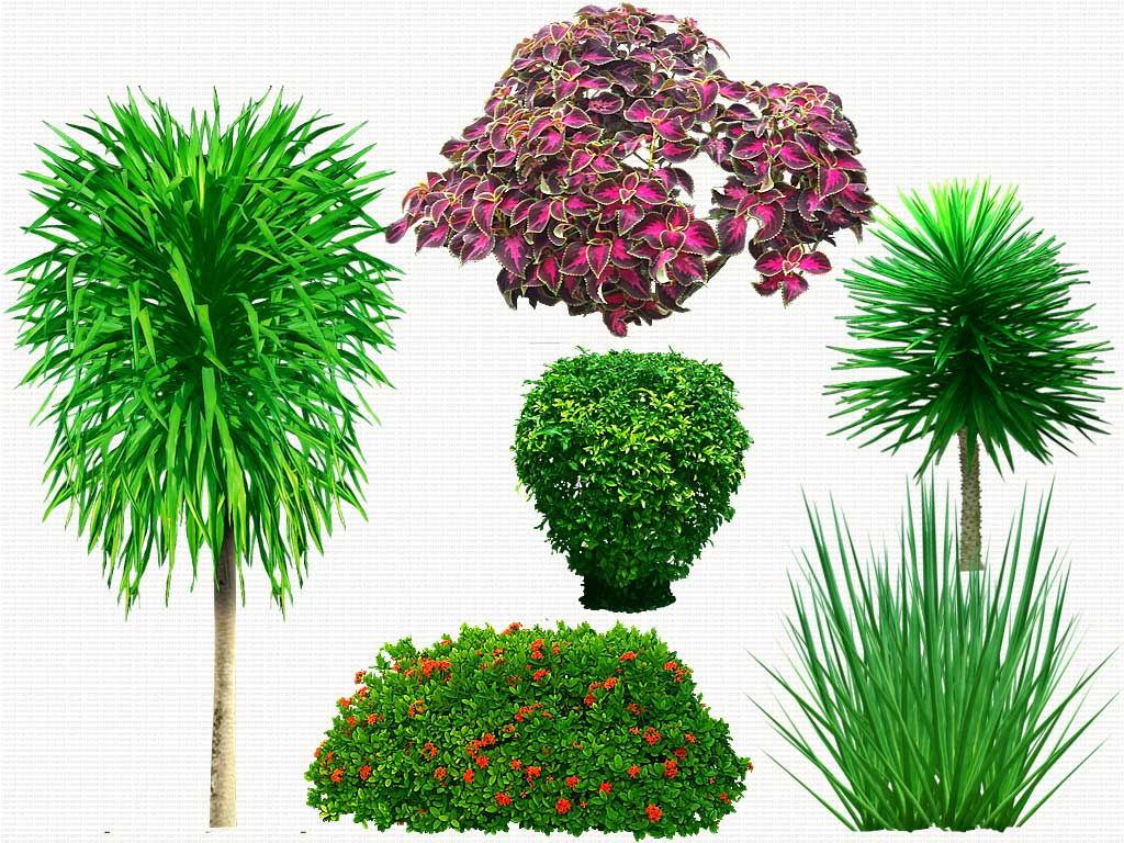 13 Plants In Plan Psd Free Download Images Photoshop Transparent Trees Photoshop Trees Plan View And Landscape Design Plant Templates Newdesignfile Com