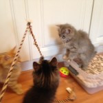 Playing in the kitten room