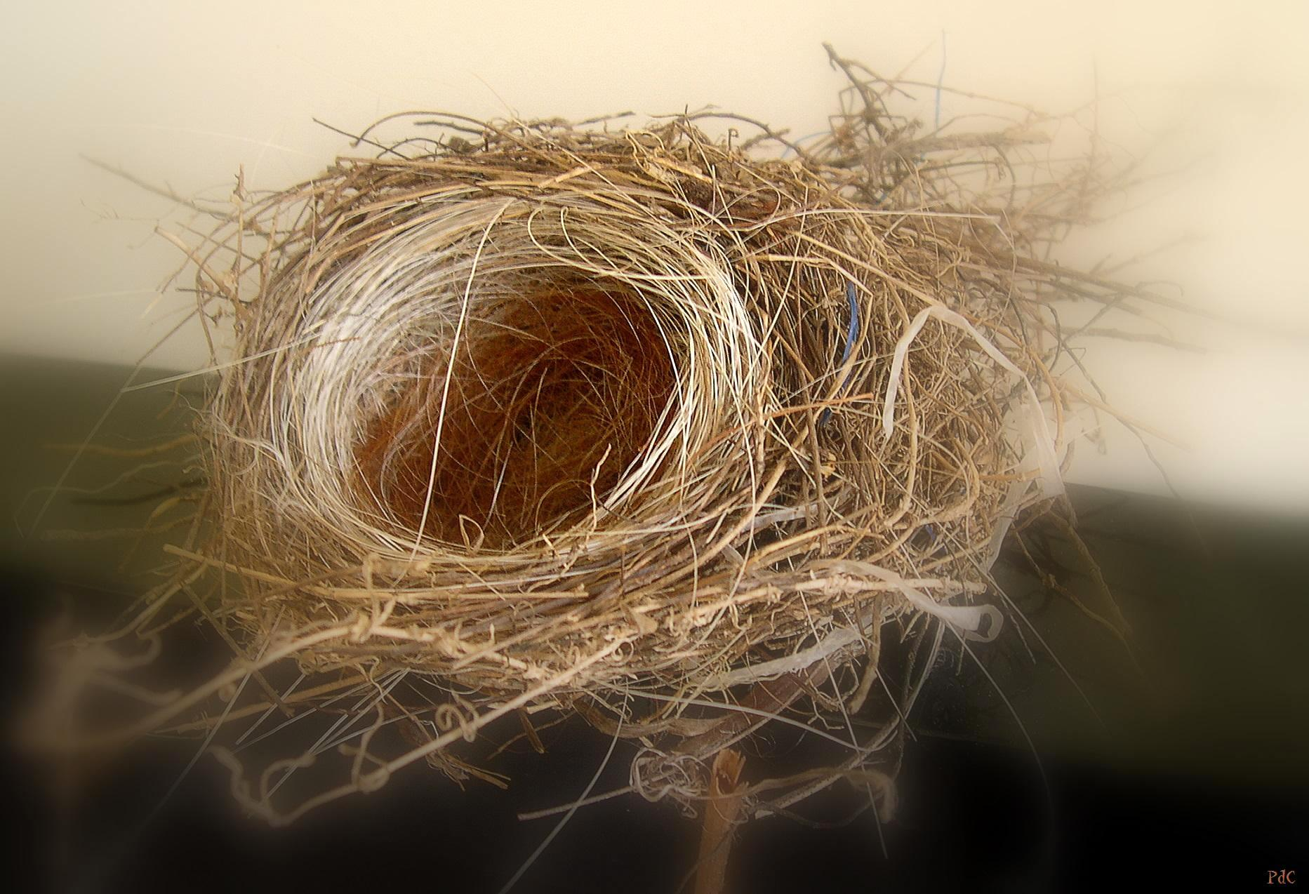Lifeline Quotes Wallpaper White Hair In Our Bird S Nest New England S Narrow Road