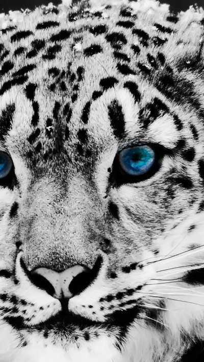 75 HD Animals iPhone Backgrounds