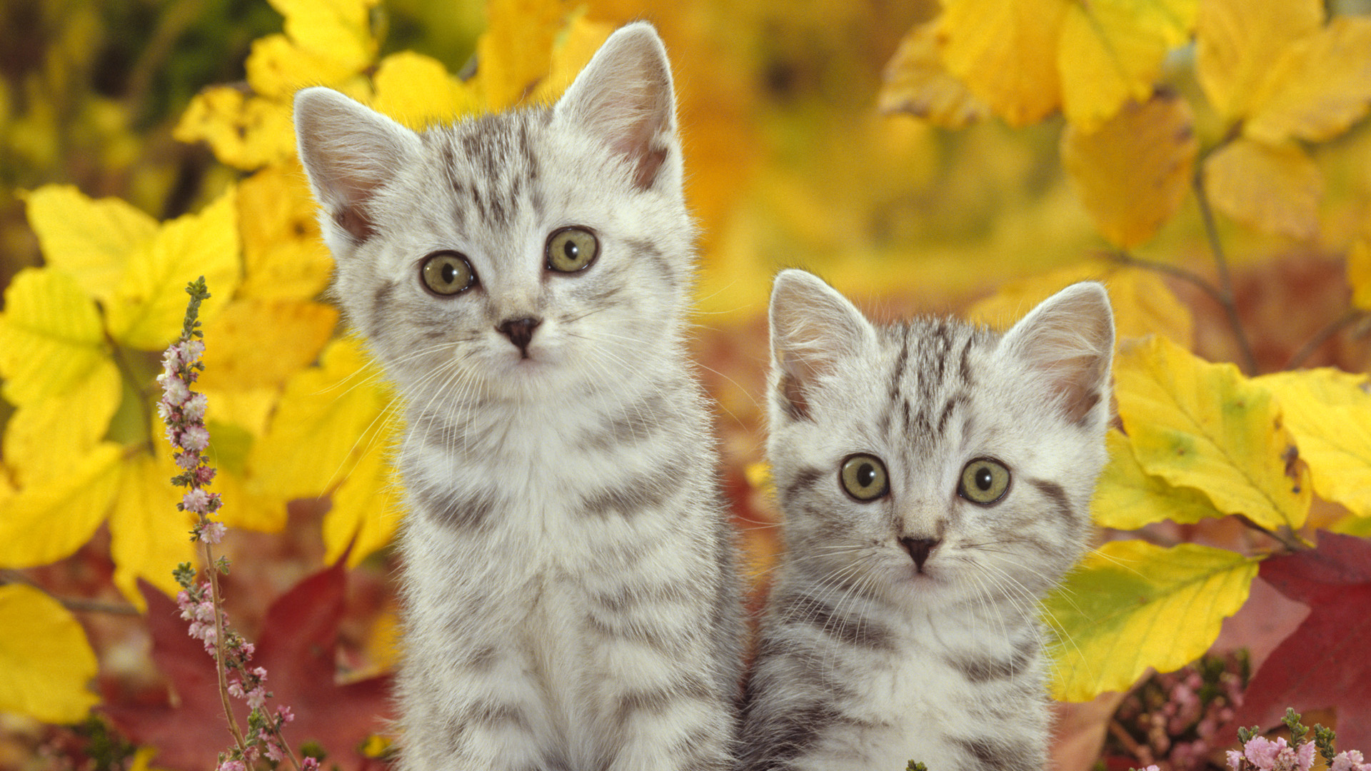 Cute Puppy Wallpapers For Iphone 50 Free Hd Cat Wallpapers