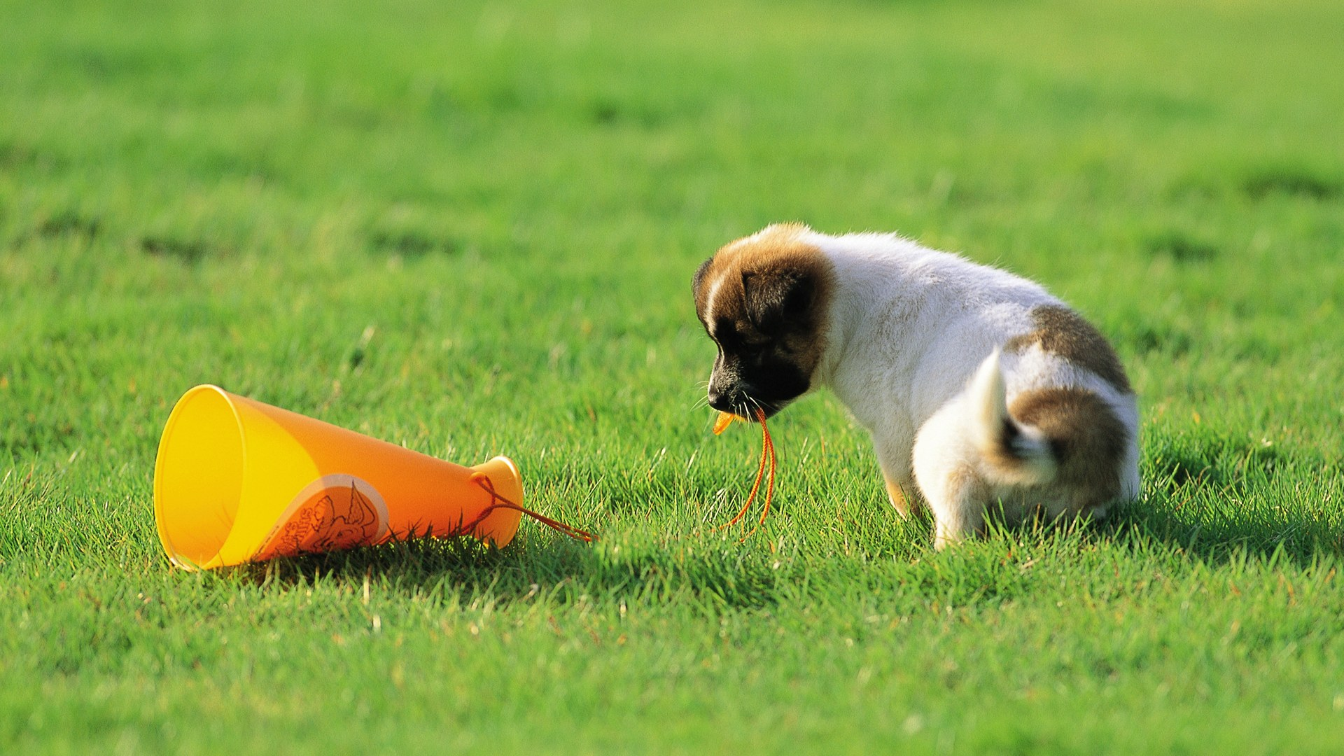 Cute Puppy Wallpapers For Iphone 50 Free Hd Dog Wallpapers
