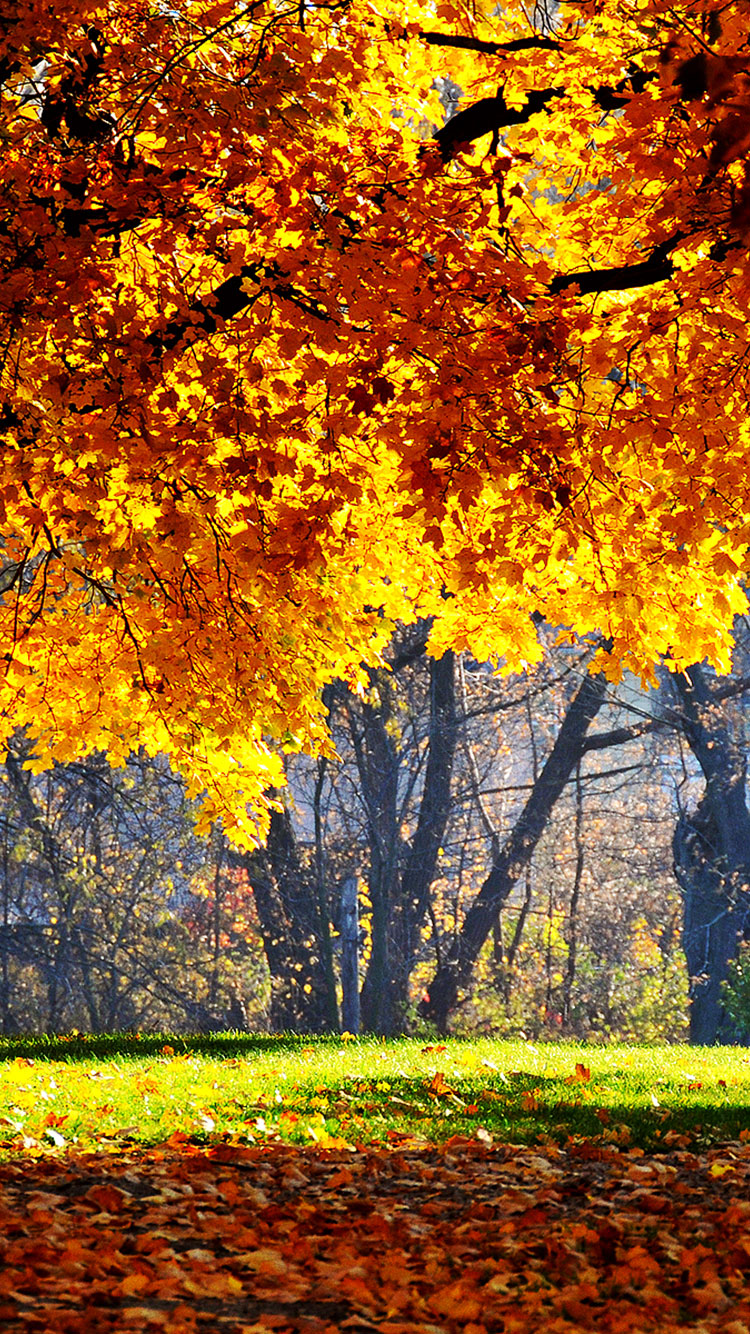 Falling Leaves Wallpaper Screensavers 25 Fall Iphone Wallpapers