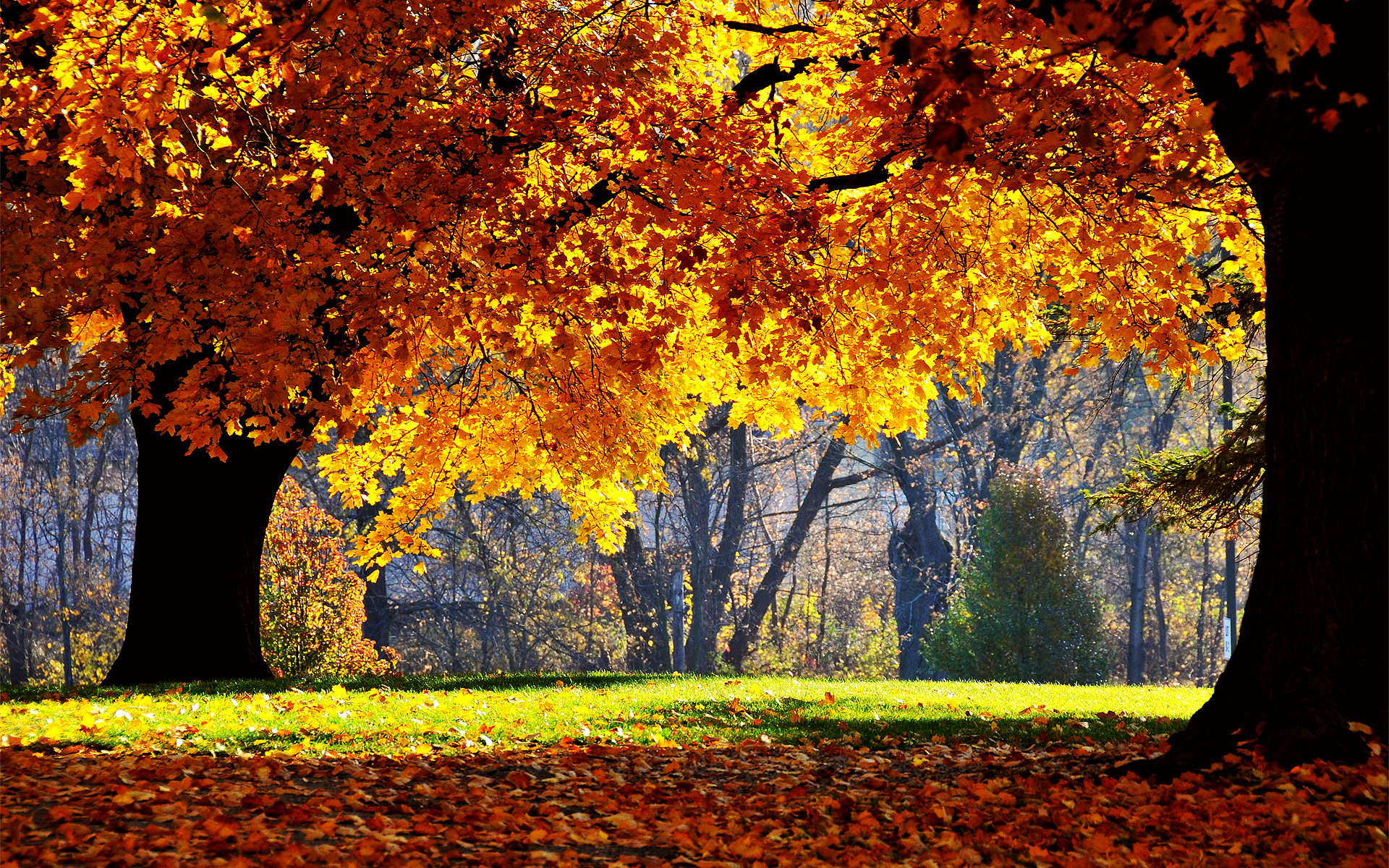 Nachural Gardens 25 Stunning Fall Wallpapers
