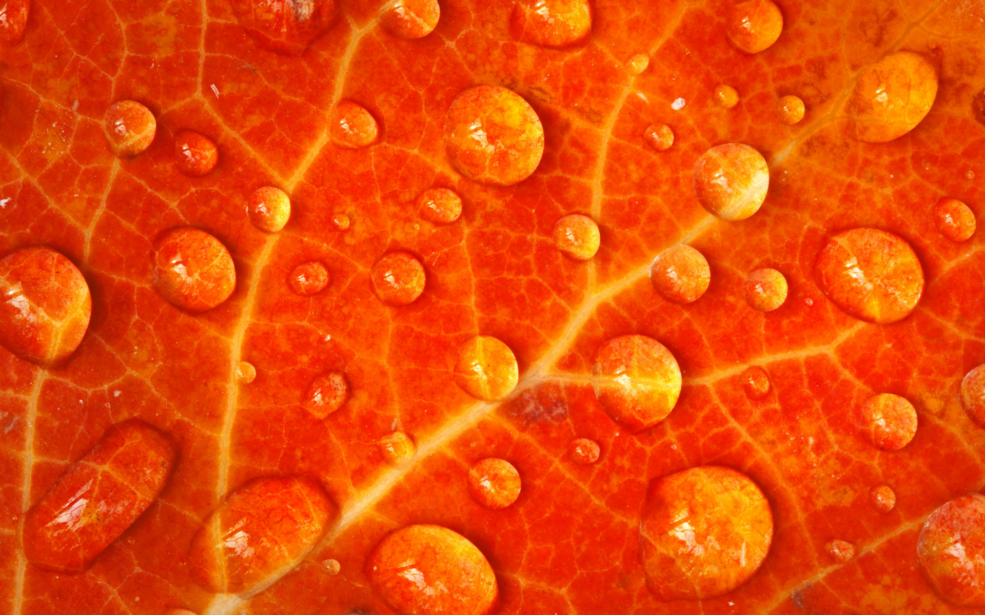 Water Drop Wallpaper For Iphone 30 Hd Orange Wallpapers