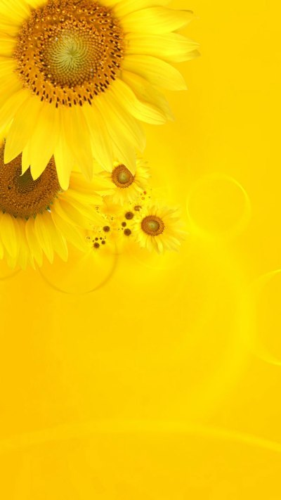 30 HD Yellow iPhone Wallpapers