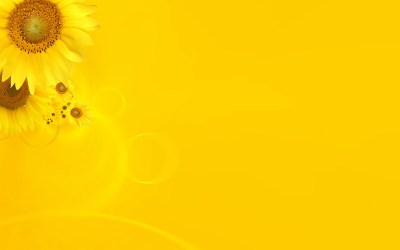 30 HD Yellow Wallpapers