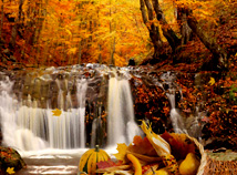 Fall Wallpaper Japan New Free Screensavers Thanksgiving Day Screensavers