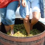 new jersey wine events - four sisters grape stomping