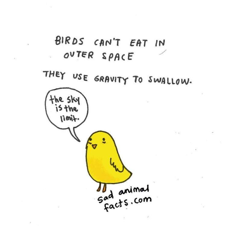 Sad-Animal-Facts-Birds