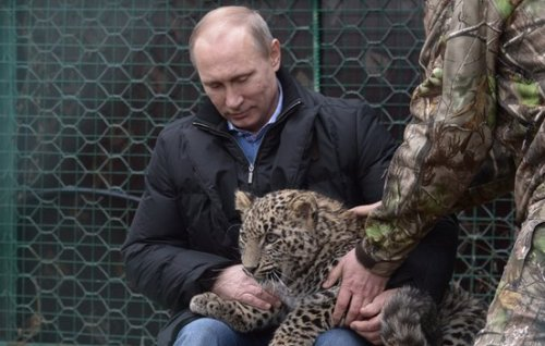President Putin strokes a leopard cub as he visits the Persian leopard breeding and rehabilitation centre in the National Park in the Black Sea resort of Sochi on 4 February.