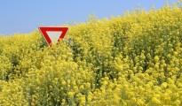 Stop aux OGM - Stop GMO