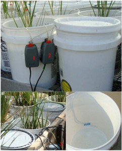 Tidal simulator microcosm units consisted of one 18.9-L bucket containing a Spartina alterniflora sward connected to a second reservoir bucket (with a lid to prevent evaporation) by aquarium tubing attached to two water-lifting pumps.(Image credit:Bioone journals)