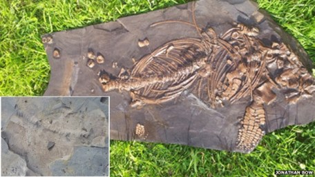 Ichthyosaurs_bow