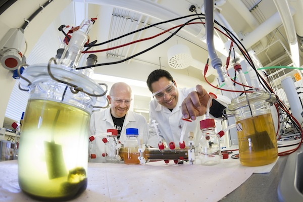 Bacteria powered fuel cells