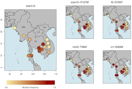 Distributions of kelch13 and genetic background mutations associated with artemisinin resistance across Southeast Asian sites. Deeper shades of red denote higher frequencies. [Image Credit: Sanger Institute]