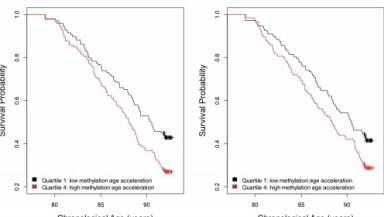 biological clock to predict longivity