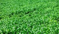 green credit modi